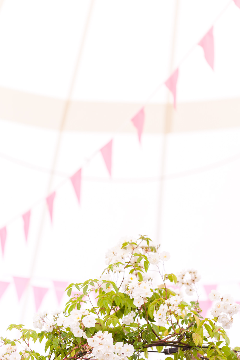 Rose Marquee - Hampton Court Flower Show 2016 - Katie Spicer Photography