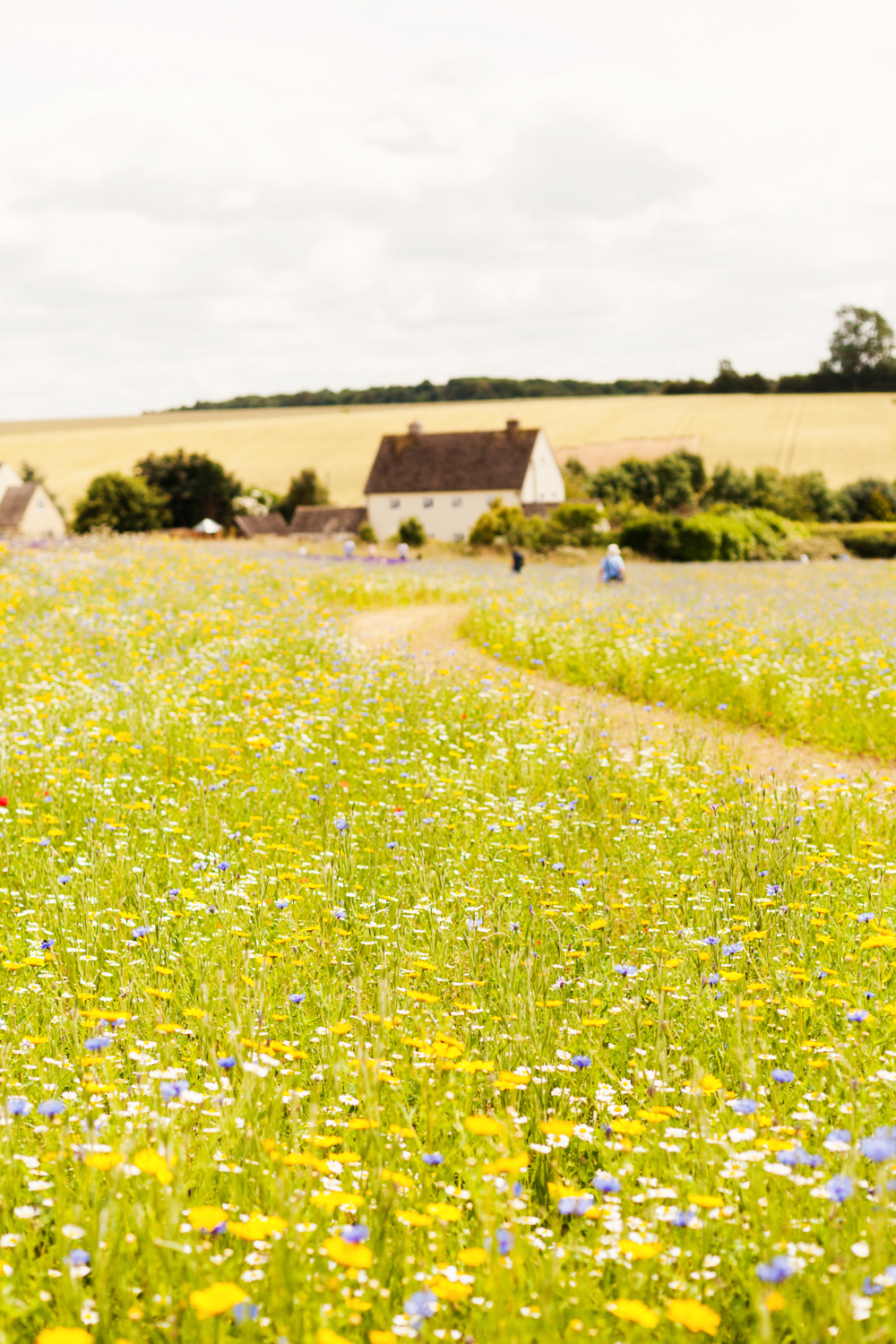 On your Things To Do page add some images of places to visit in the surrounding areas to help them plan their holiday.  This is the Cotwsold Lavender farm at Snowshill. They have fields of wild meadow flowers as well as the lavender. So pretty!