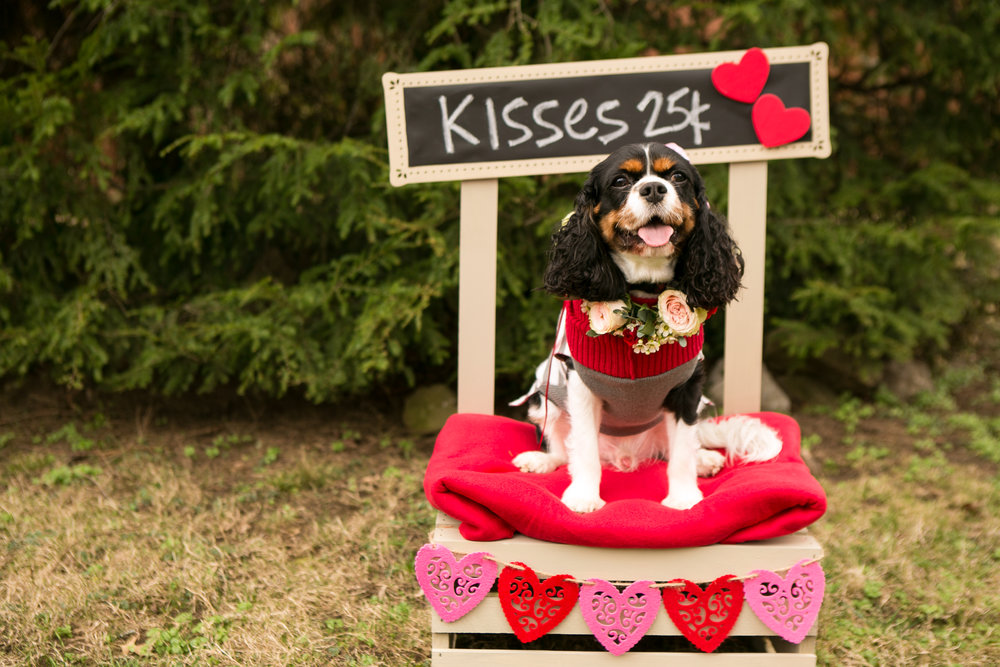 Fete Nashville_Valentines Dog Party_Nashville Weddings1.jpg