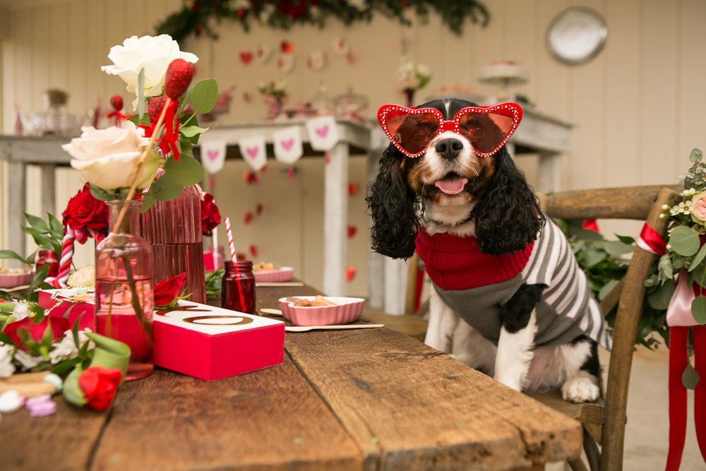 Fete Nashville_Valentines Dog Party_Nashville Weddings2.jpg