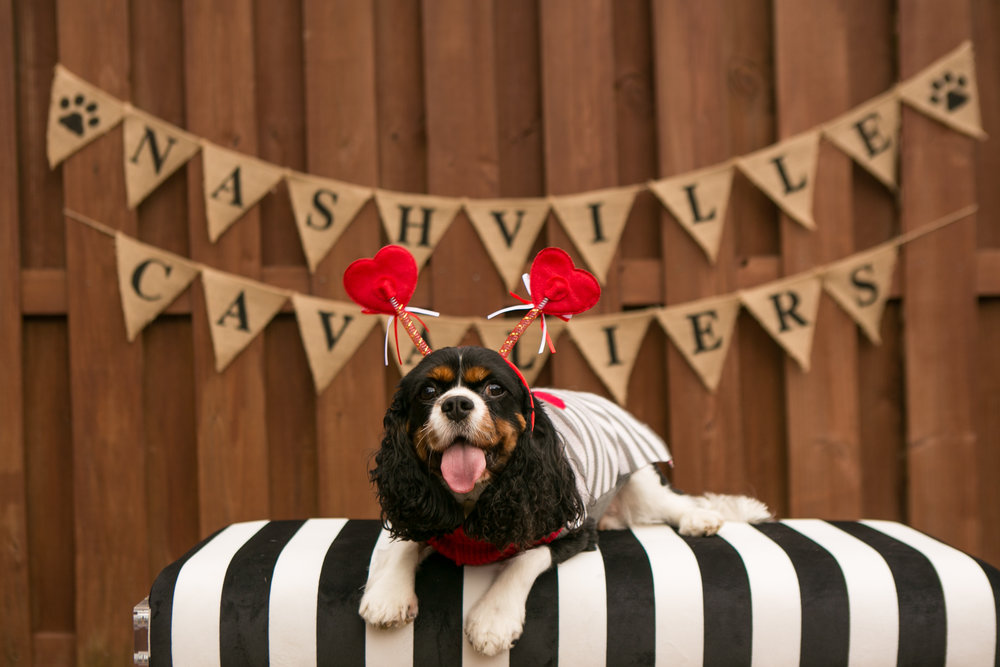 Fete Nashville_Valentines Dog Party_Nashville Weddings3.jpg