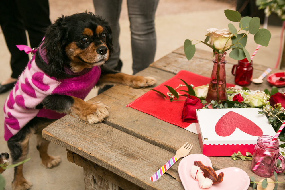 Fete Nashville_Valentines Dog Party_Nashville Weddings4.jpg