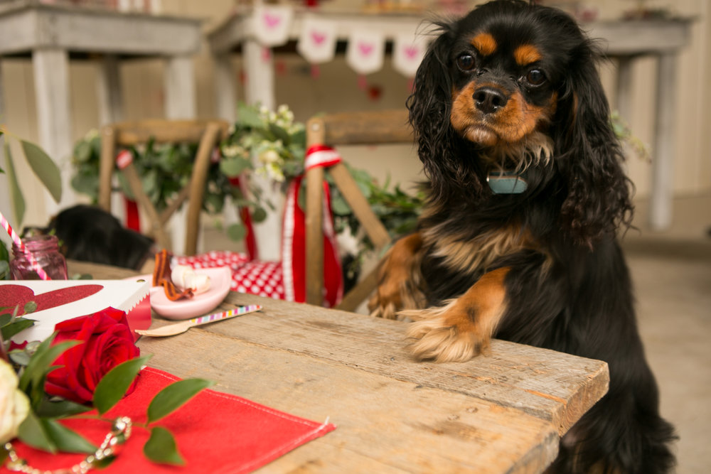 Fete Nashville_Valentines Dog Party_Nashville Weddings5.jpg