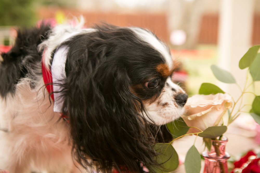 Fete Nashville_Valentines Dog Party_Nashville Weddings7.jpg
