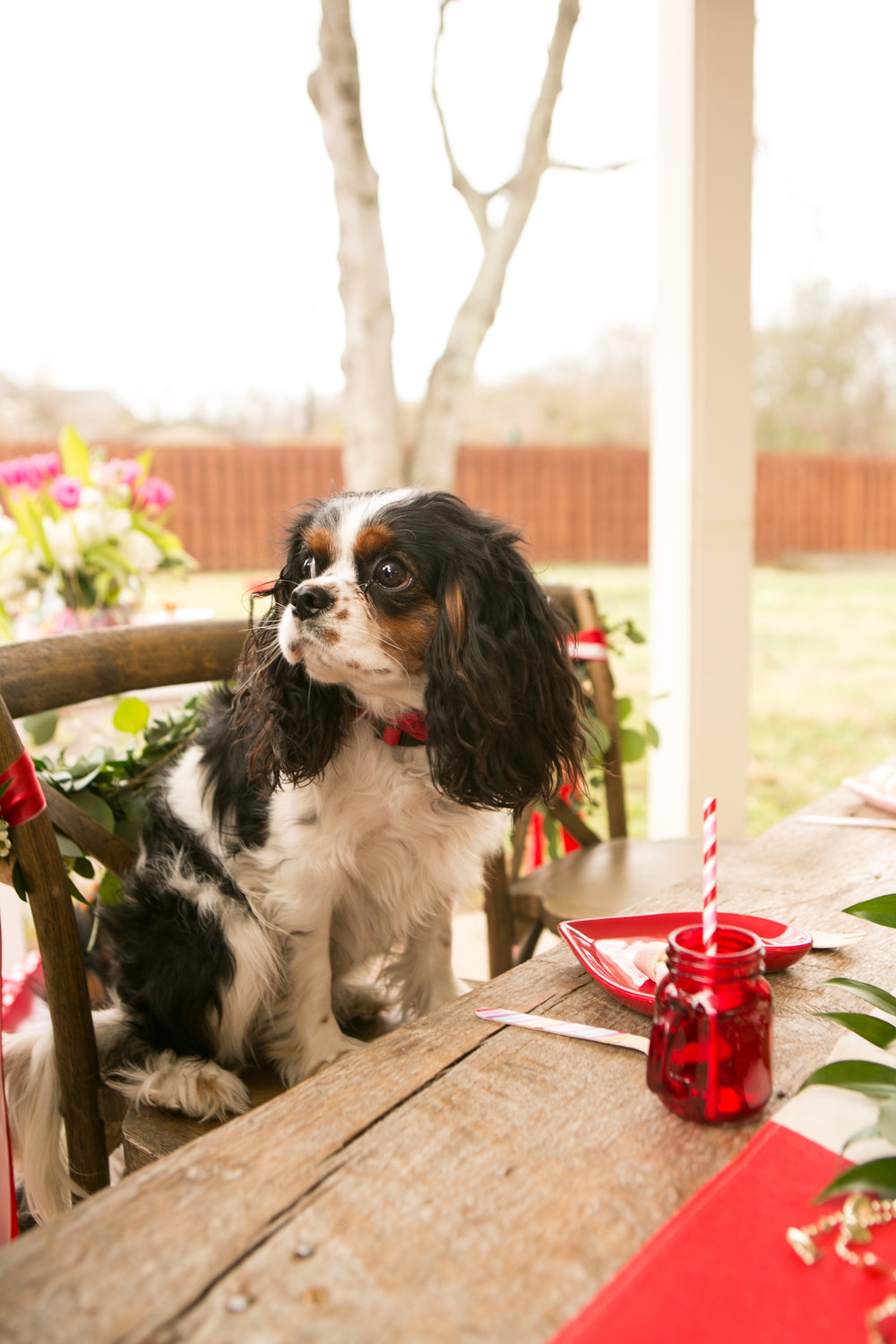 Fete Nashville_Valentines Dog Party_Nashville Weddings8.jpg