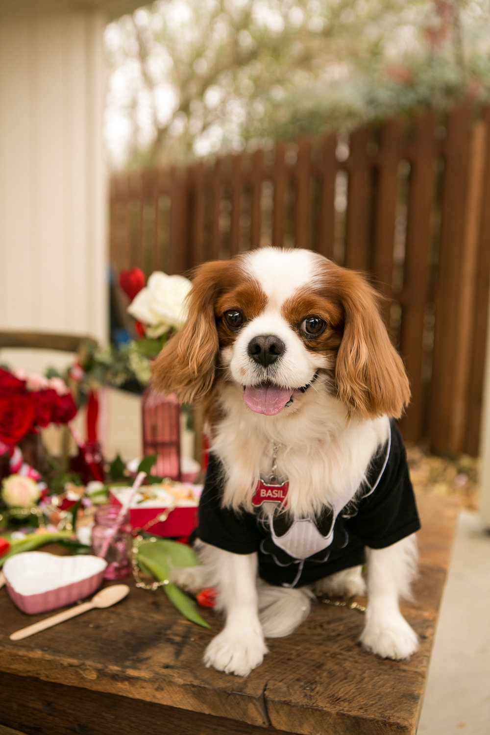 Fete Nashville_Valentines Dog Party_Nashville Weddings10.jpg