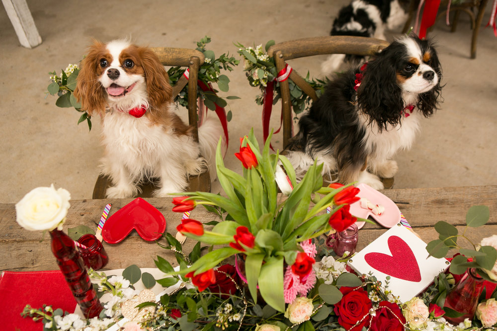 Fete Nashville_Valentines Dog Party_Nashville Weddings9.jpg