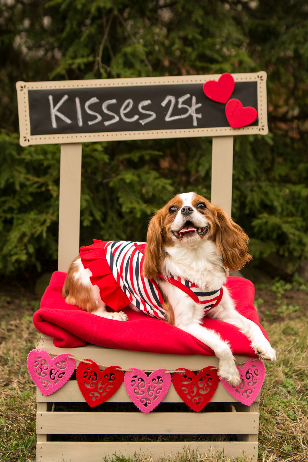 Fete Nashville_Valentines Dog Party_Nashville Weddings11.jpg