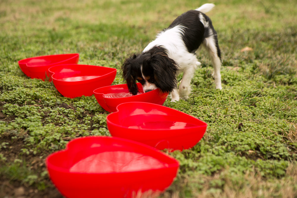Fete Nashville_Valentines Dog Party_Nashville Weddings12.jpg