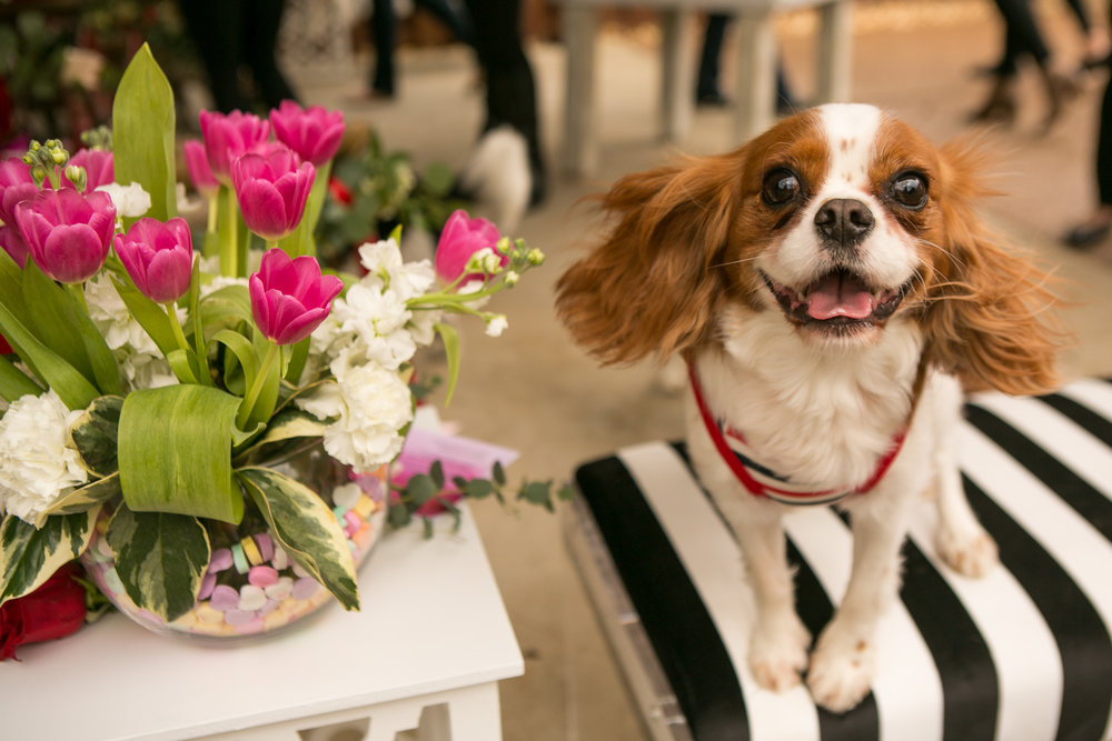 Fete Nashville_Valentines Dog Party_Nashville Weddings15.jpg