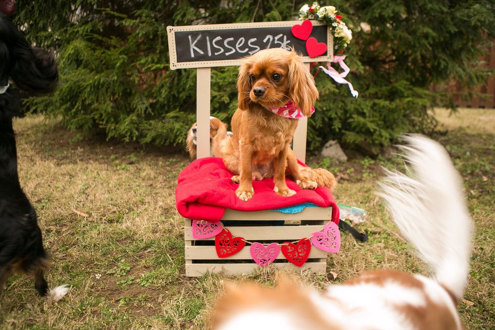 Fete Nashville_Valentines Dog Party_Nashville Weddings18.jpg