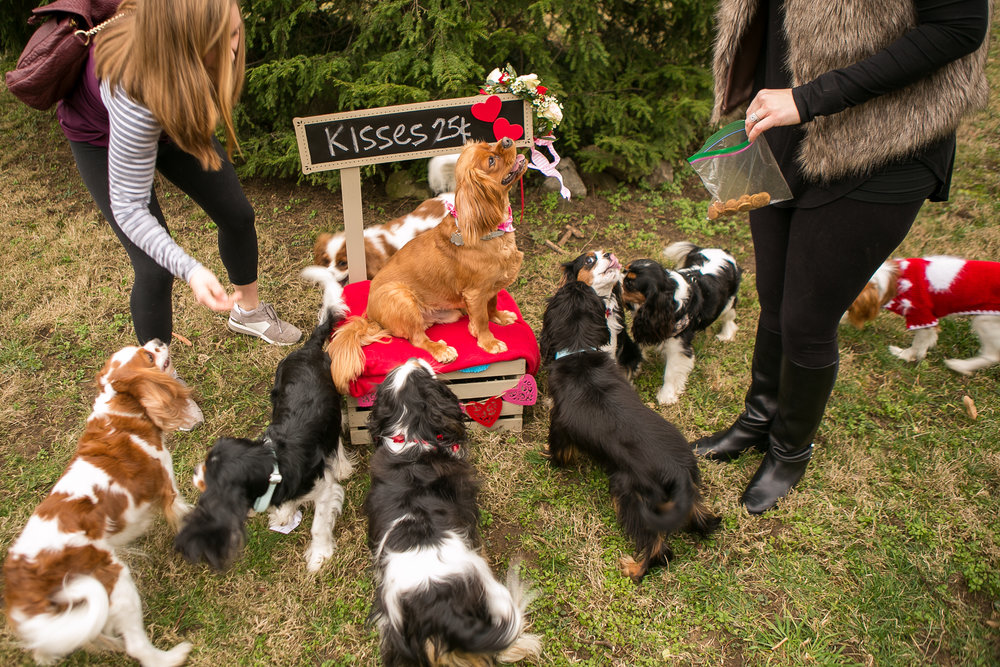 Fete Nashville_Valentines Dog Party_Nashville Weddings19.jpg