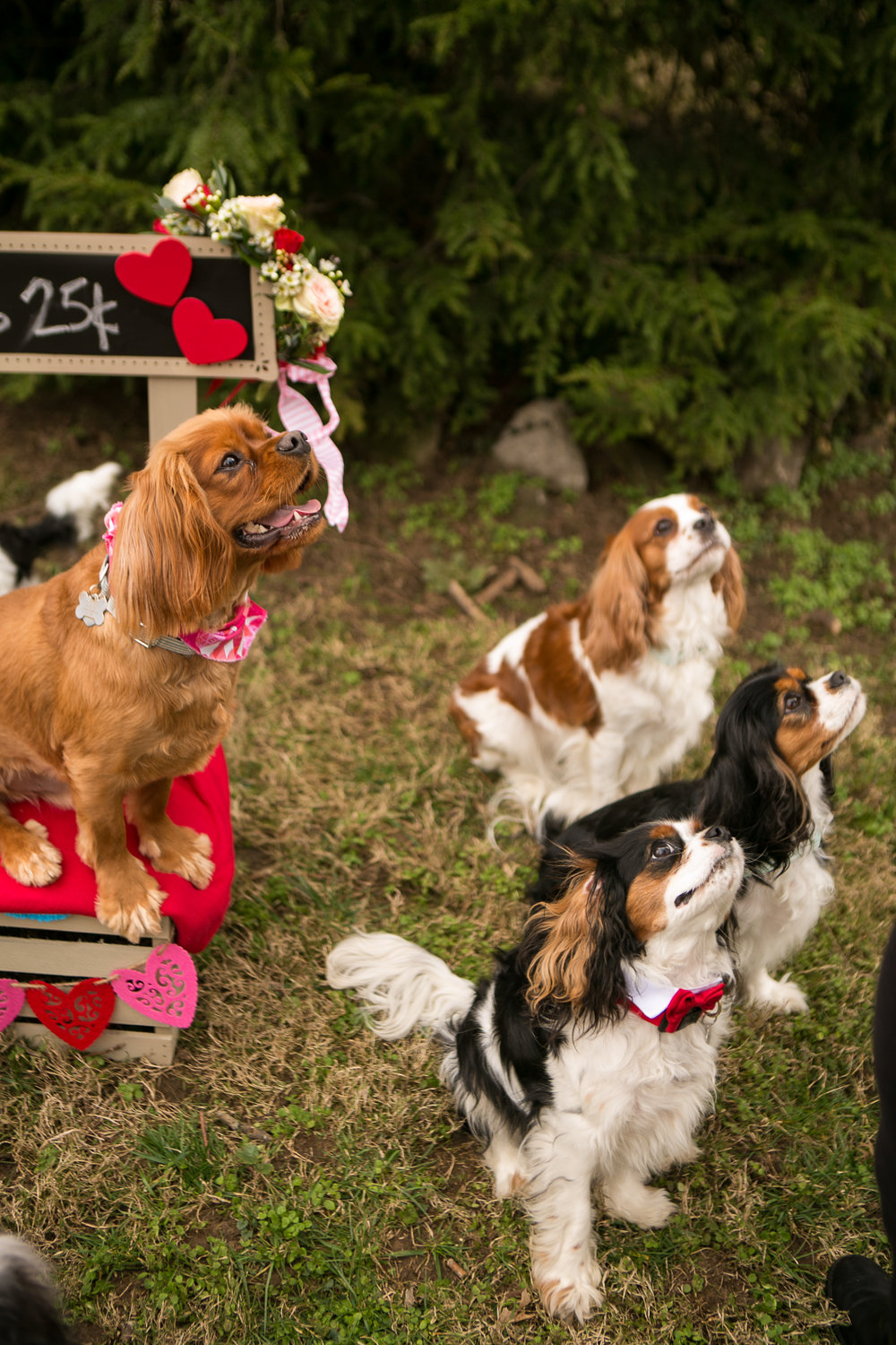 Fete Nashville_Valentines Dog Party_Nashville Weddings20.jpg
