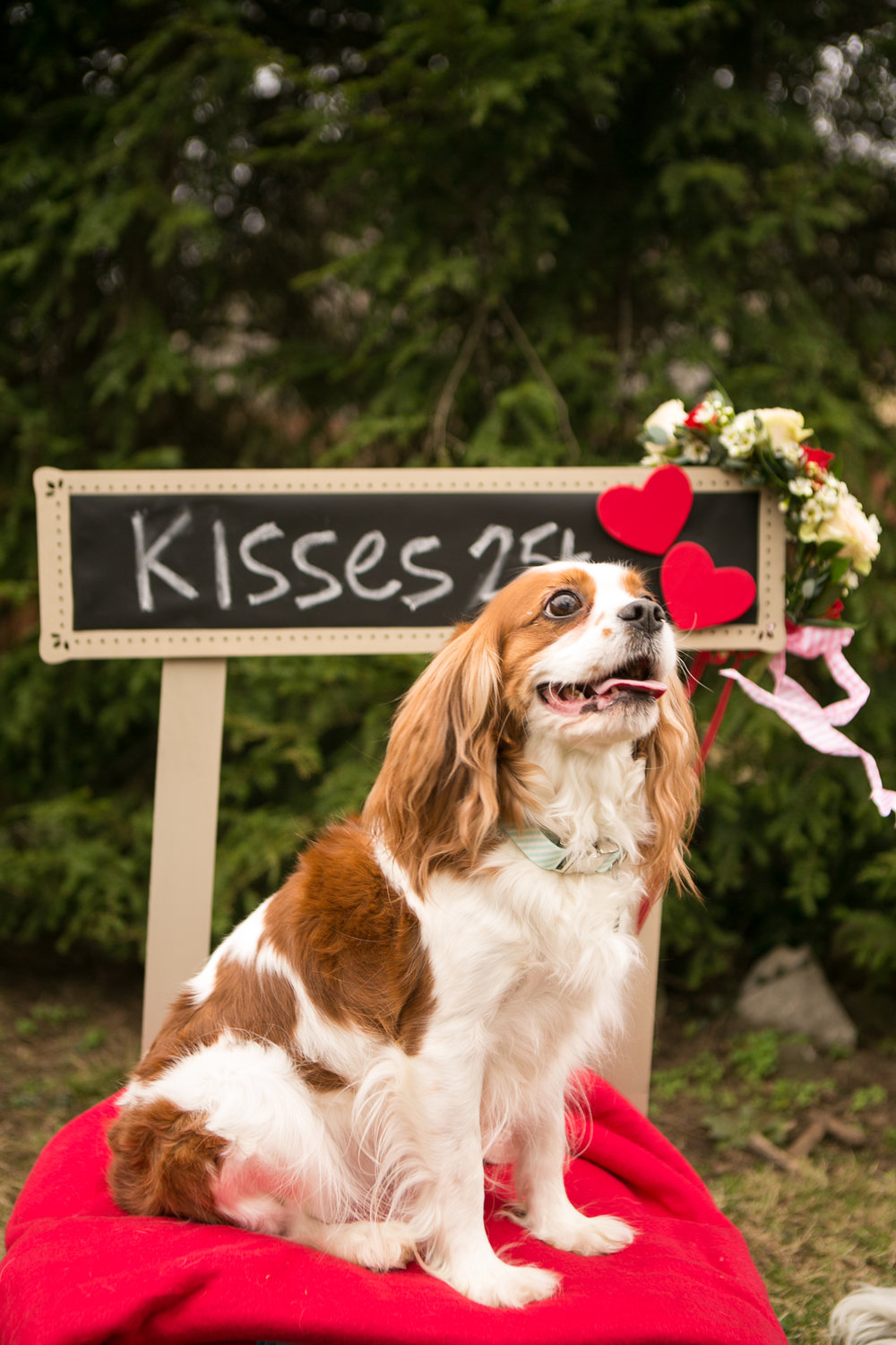 Fete Nashville_Valentines Dog Party_Nashville Weddings21.jpg