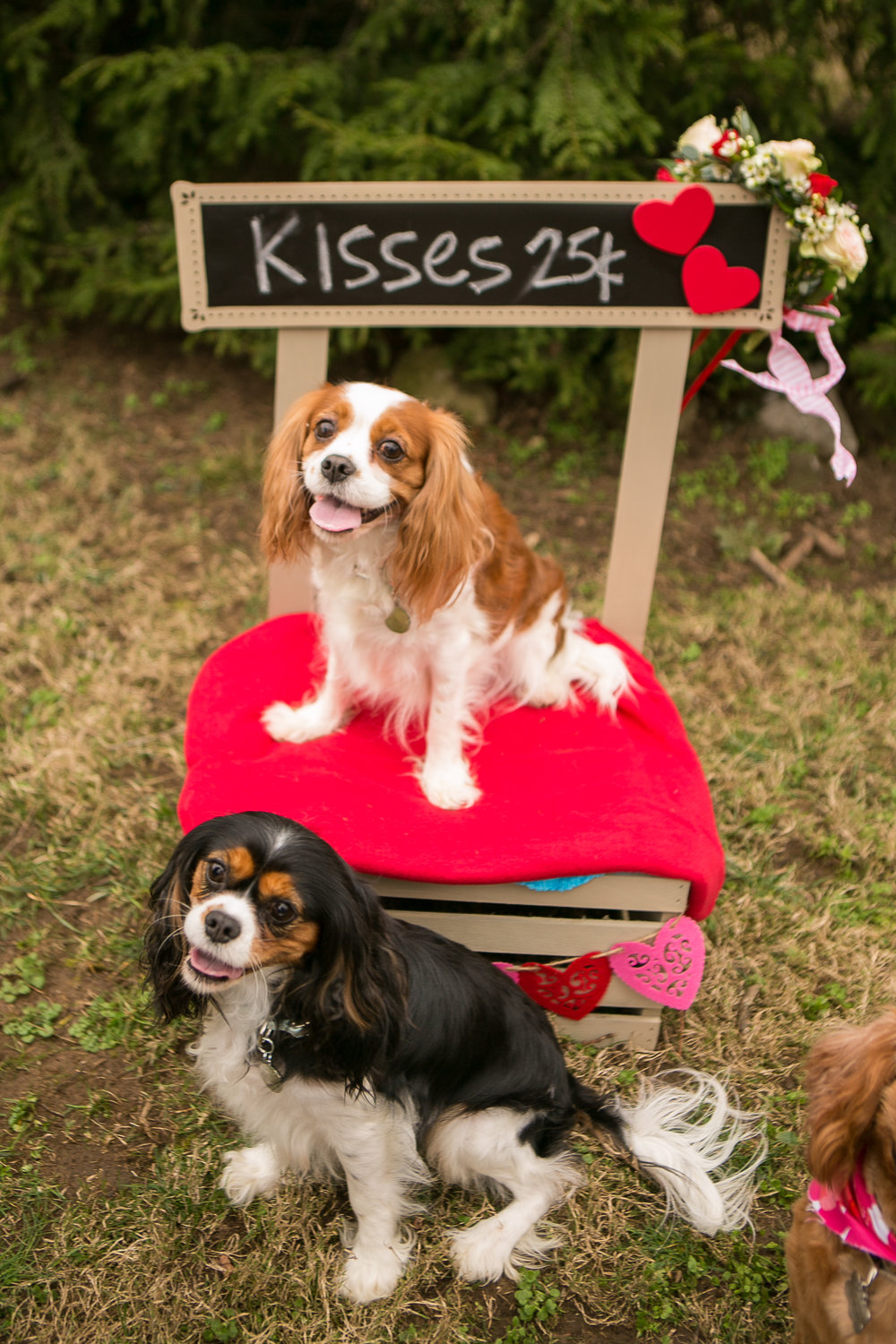 Fete Nashville_Valentines Dog Party_Nashville Weddings23.jpg
