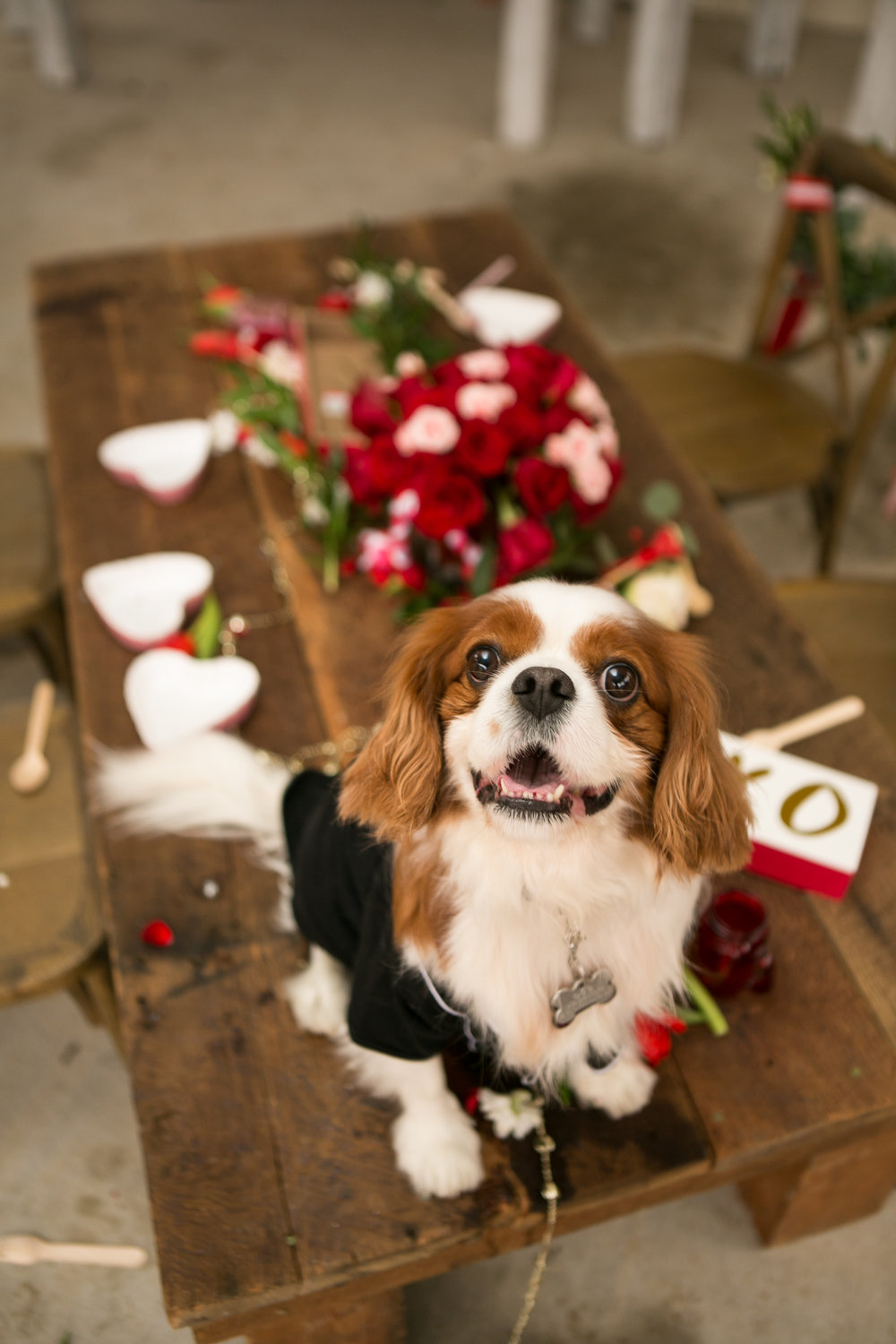 Fete Nashville_Valentines Dog Party_Nashville Weddings25.jpg