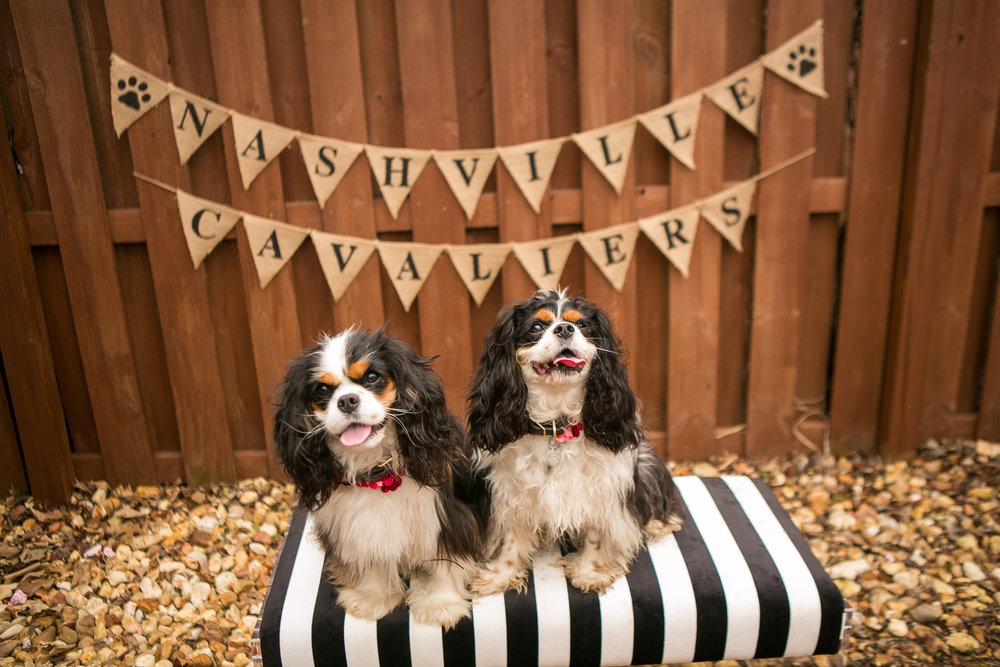 Fete Nashville_Valentines Dog Party_Nashville Weddings26.jpg