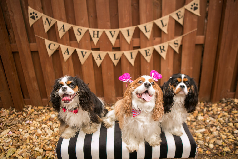 Fete Nashville_Valentines Dog Party_Nashville Weddings27.jpg