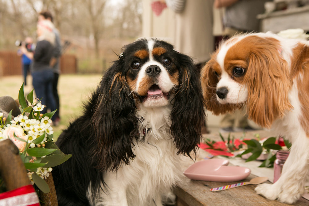 Fete Nashville_Valentines Dog Party_Nashville Weddings29.jpg