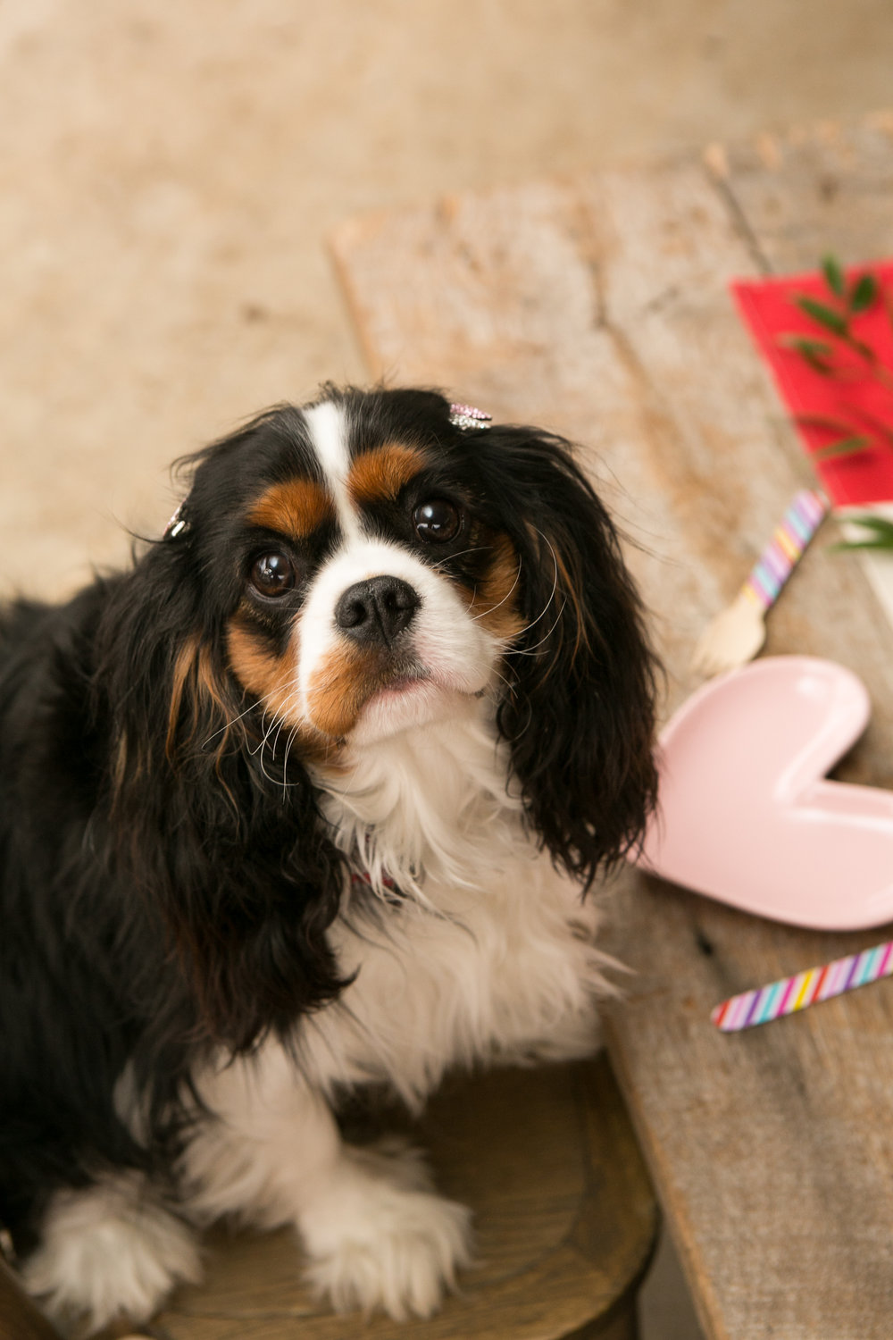Fete Nashville_Valentines Dog Party_Nashville Weddings30.jpg