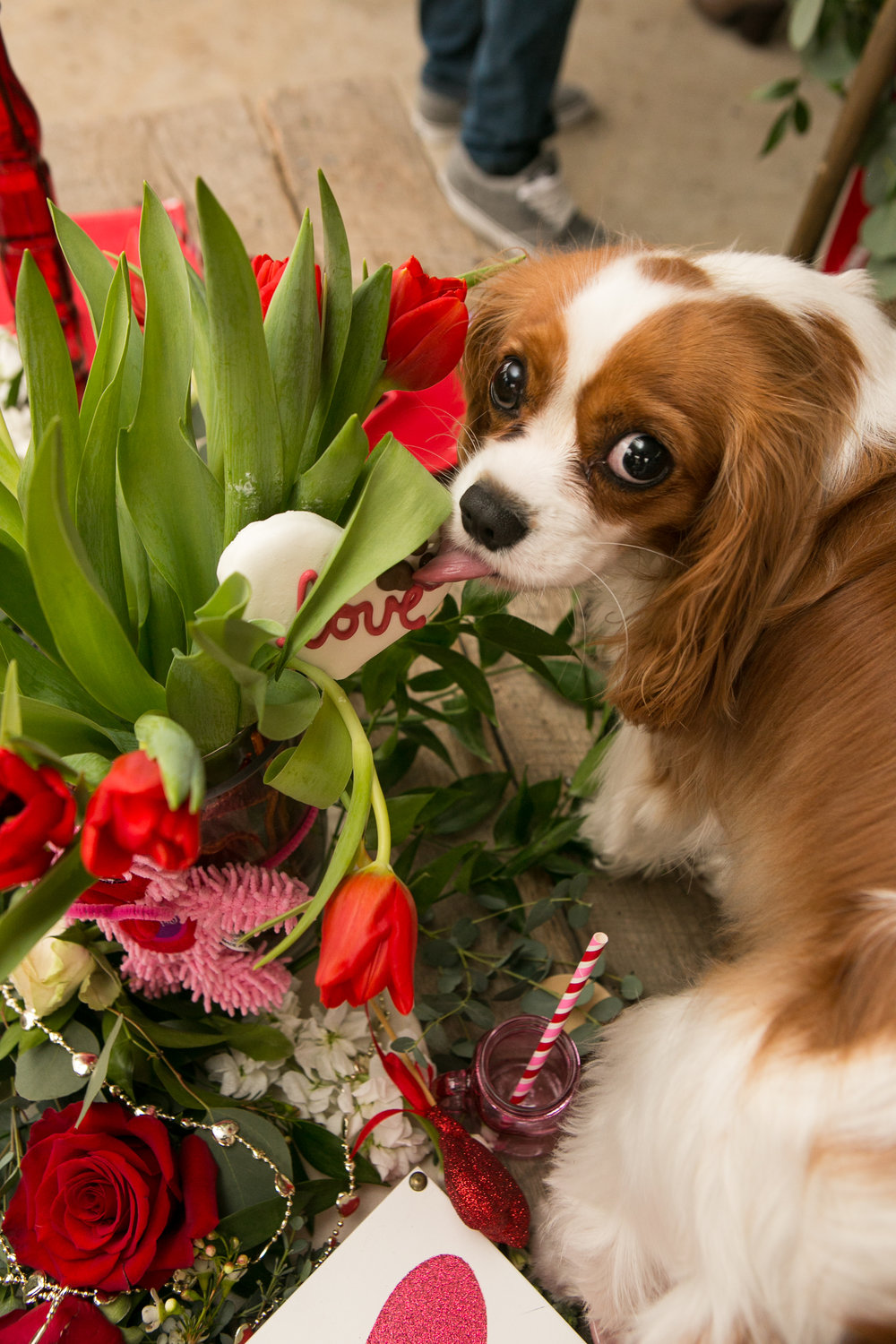 Fete Nashville_Valentines Dog Party_Nashville Weddings31.jpg