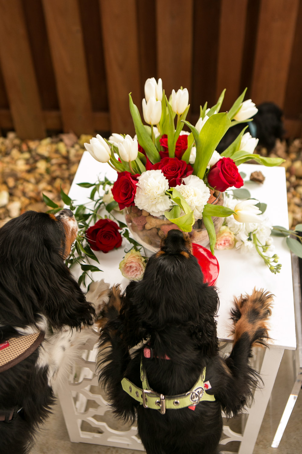 Fete Nashville_Valentines Dog Party_Nashville Weddings34.jpg