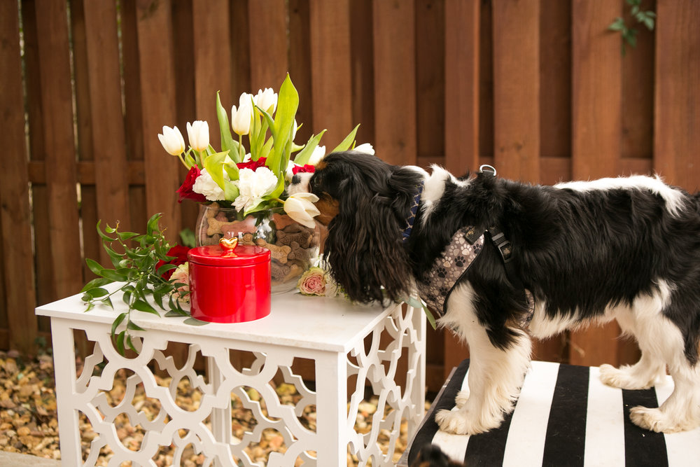 Fete Nashville_Valentines Dog Party_Nashville Weddings35.jpg