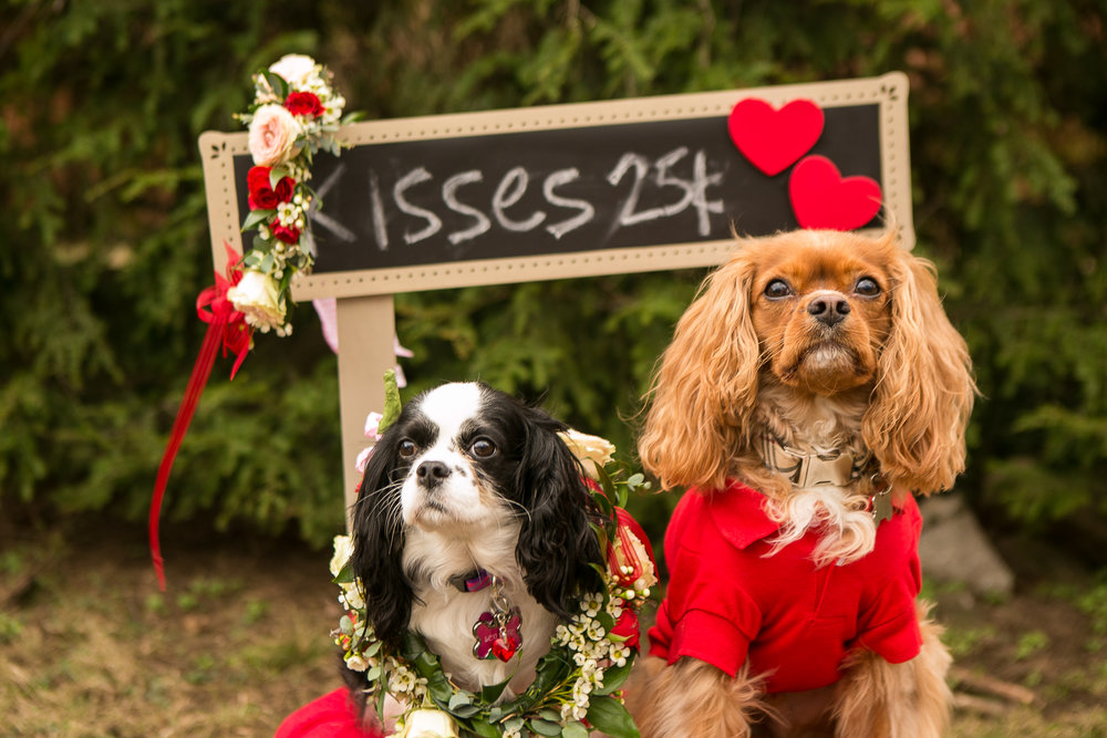 Fete Nashville_Valentines Dog Party_Nashville Weddings36.jpg