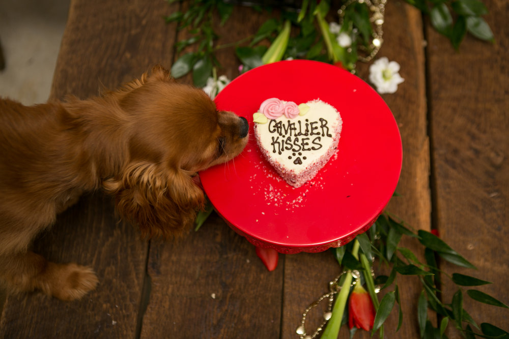 Fete Nashville_Valentines Dog Party_Nashville Weddings38.jpg