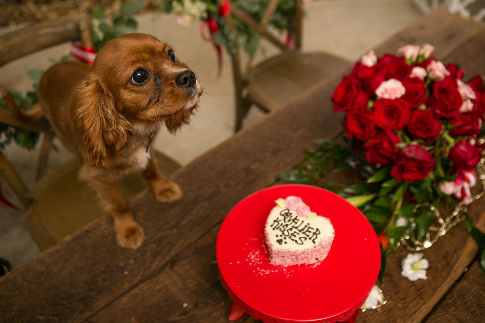 Fete Nashville_Valentines Dog Party_Nashville Weddings39.jpg