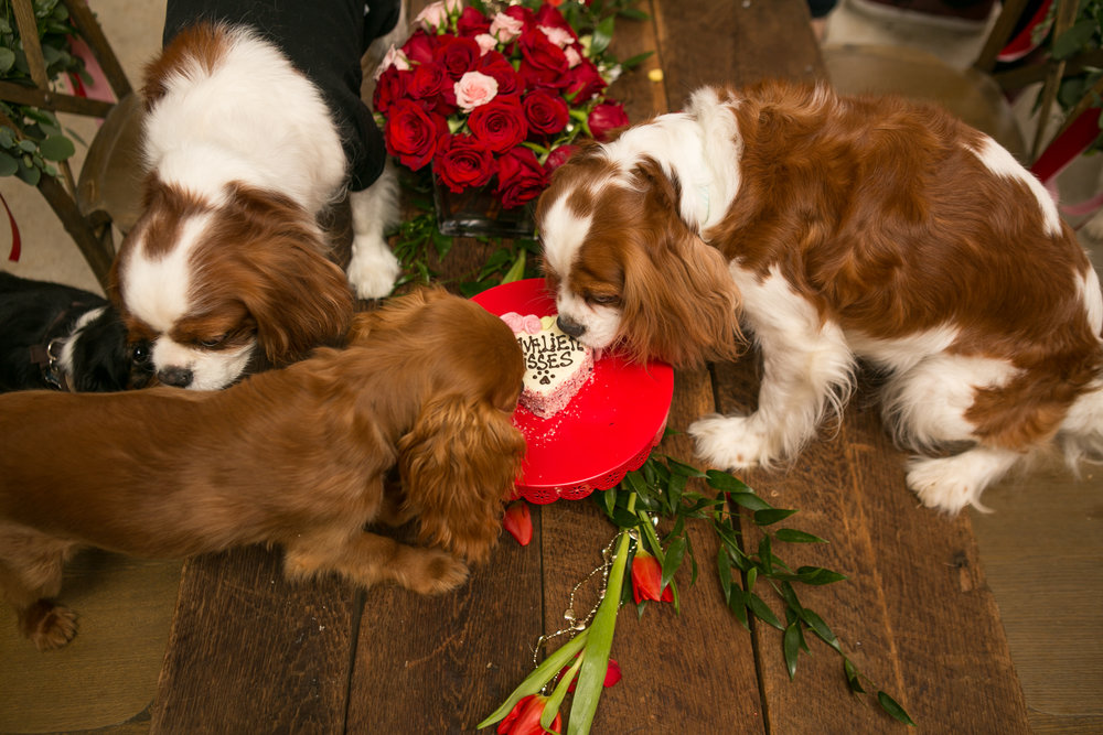 Fete Nashville_Valentines Dog Party_Nashville Weddings40.jpg