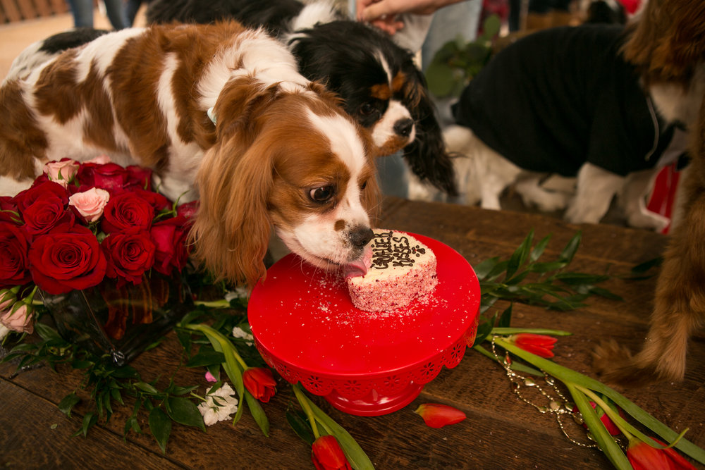 Fete Nashville_Valentines Dog Party_Nashville Weddings41.jpg