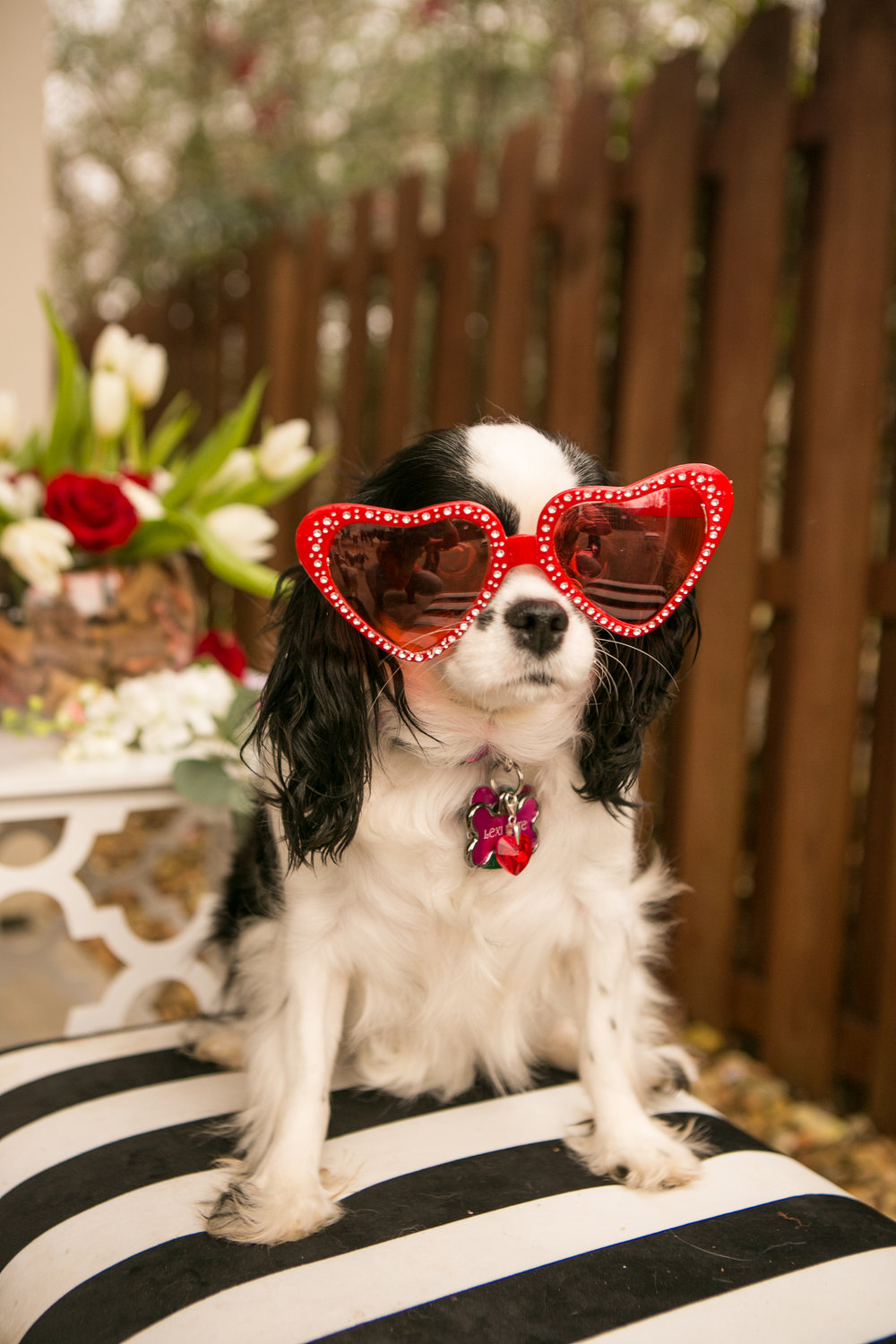 Fete Nashville_Valentines Dog Party_Nashville Weddings42.jpg