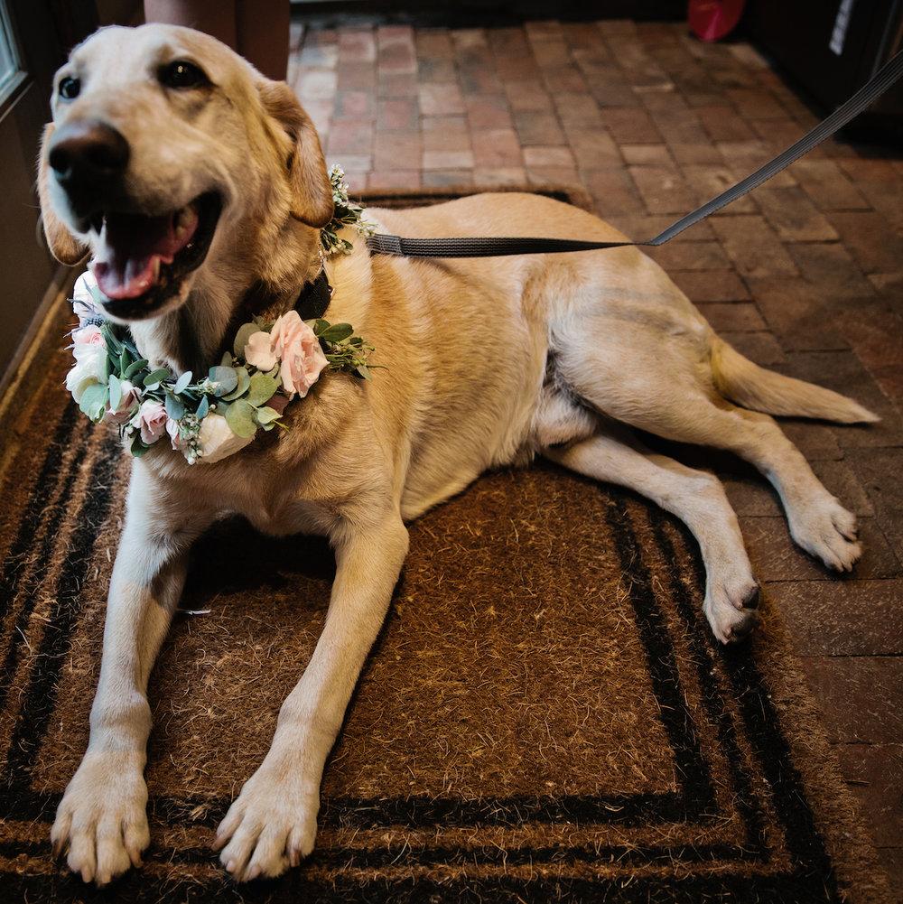 4dogs in weddings nashville Kristyn Hogan.jpg
