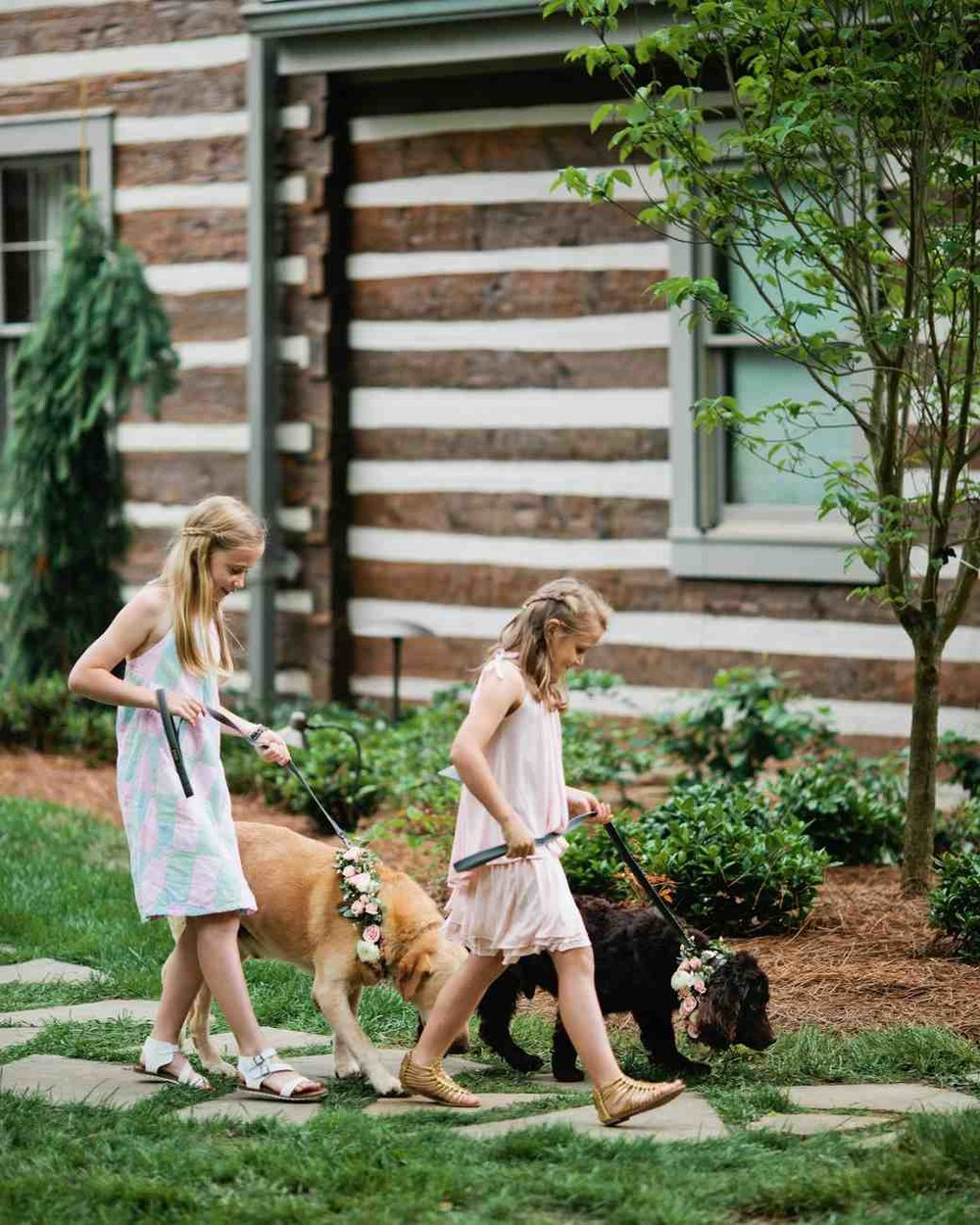 memree-rich-wedding-dogs-391-6257086-0217_vert.jpg