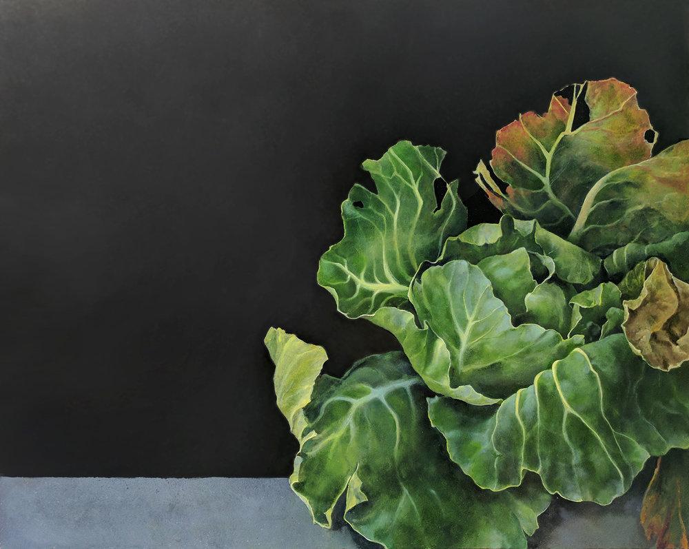 Green Cabbage on Ledge-S.jpg