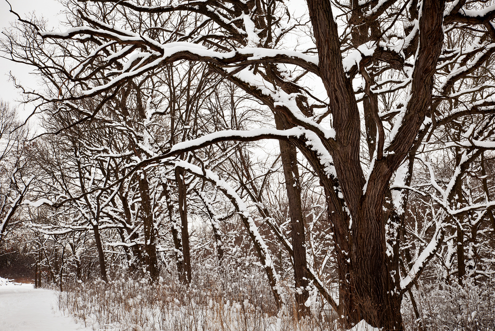 7236-3B Winter snow.jpg