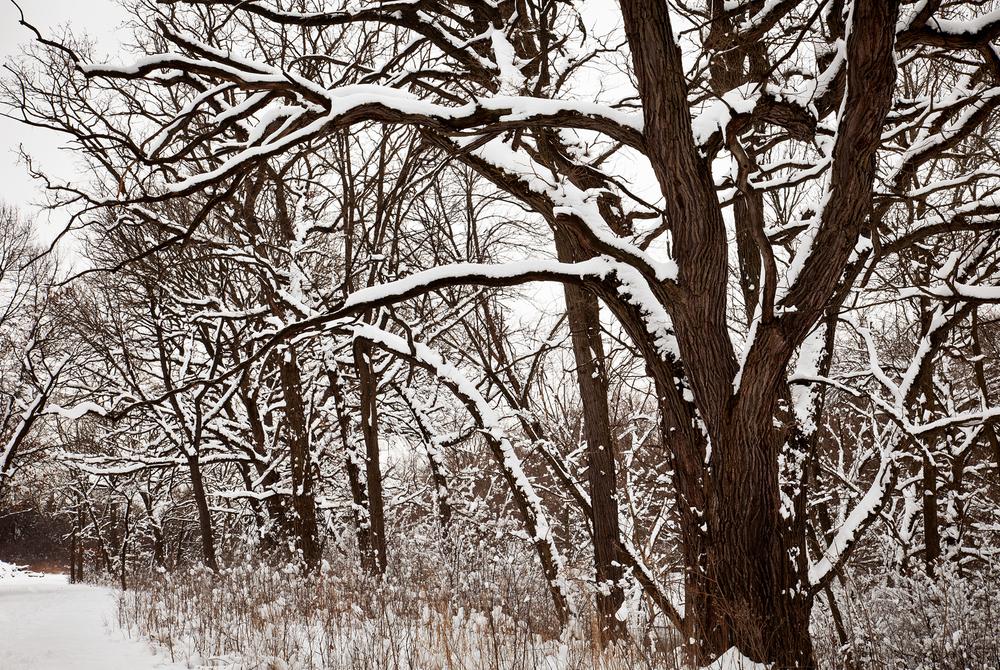 7236-3B Winter snow.jpg