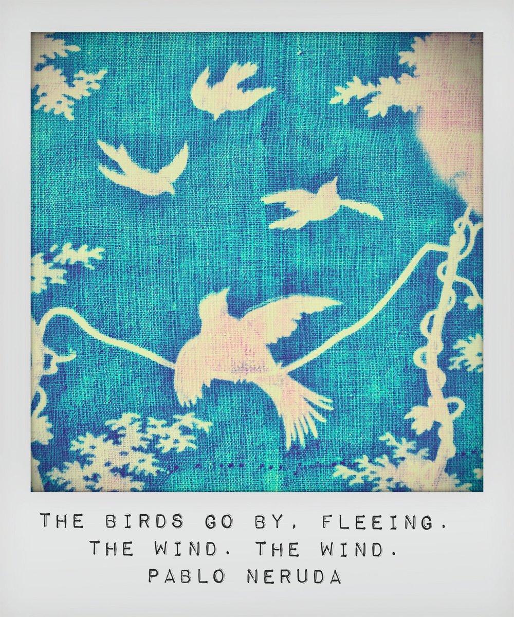 Neurda-Birds-Free