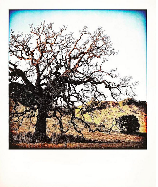 A highly filtered photo of a bare tree against a bright white sky.