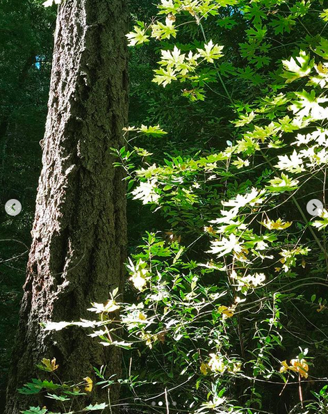 A photograph from walking through a forest on a sunny day. A nearby tree trunk and green leaves take up most of the photo.