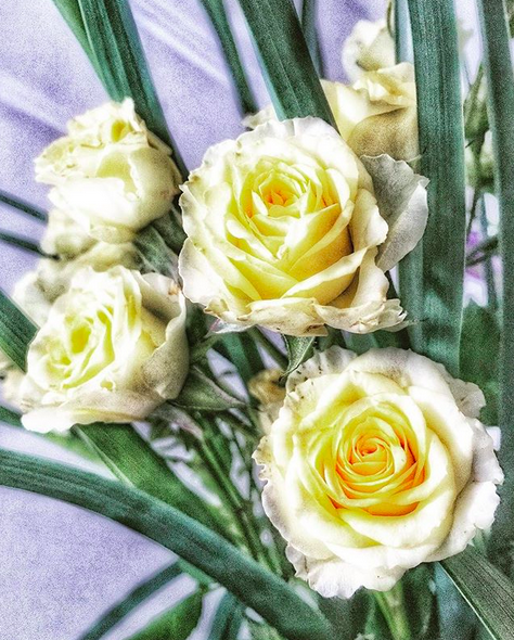 A bouquet of yellow and white roses against a grey background.