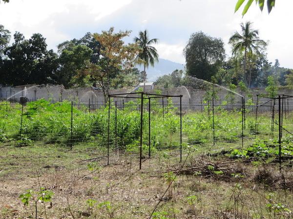 haiti 2016 065.jpg