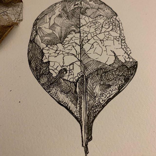 Skeleton leaf in pen#nature#winterwatch#penandink#drawn#leaves#woodland#detail