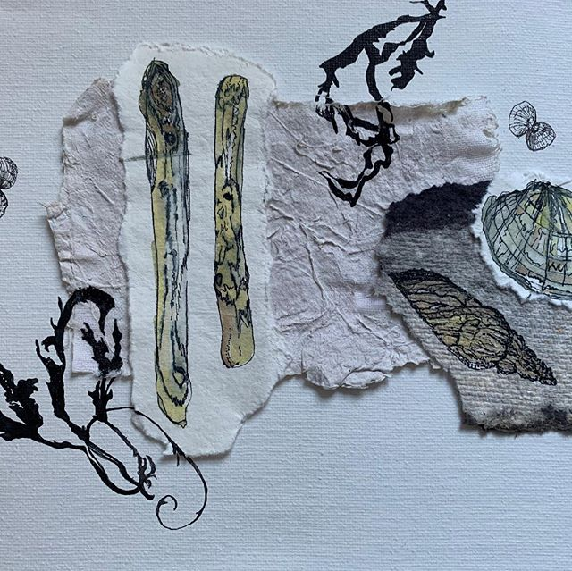 An afternoon spent productively #spring#artistsoninstagram #penandink #nature #naturalbeauty#agapanthus#driftwood #beachcomber#woodland #papermakingwithplants #multimedia #multimediaart