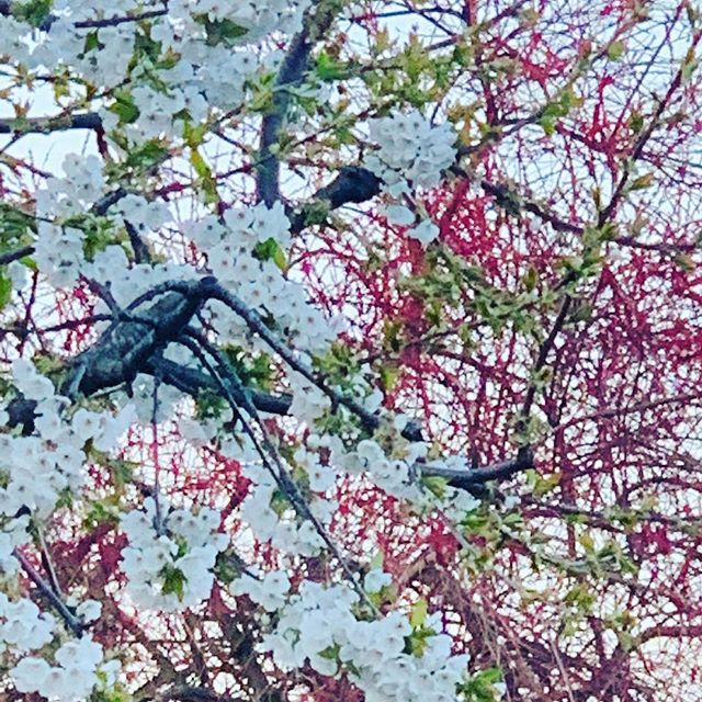 Walking in Surrey #outdoorbeauty#naturephotography #nature #mindhike2019 #natureheals #training #ecotherapy #forestbathing#april#aprildays #birdsong