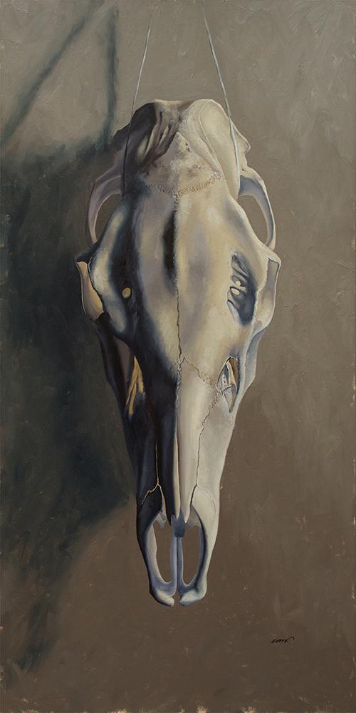 Christine Mercer-Vernon, Skull Study, Elk Cow