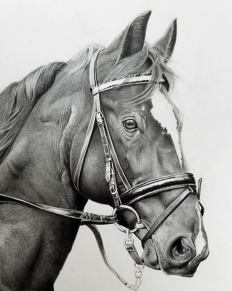 Kahi Aspelund, Horse Portrait