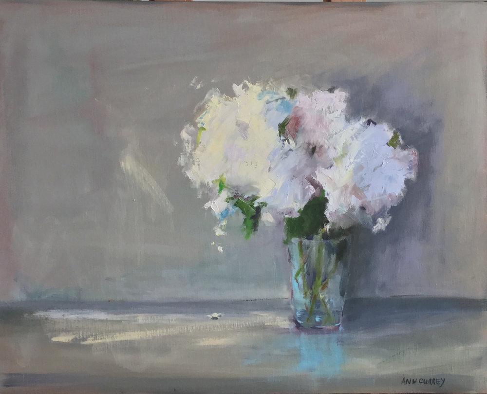 Ann Currey, Hydrangea