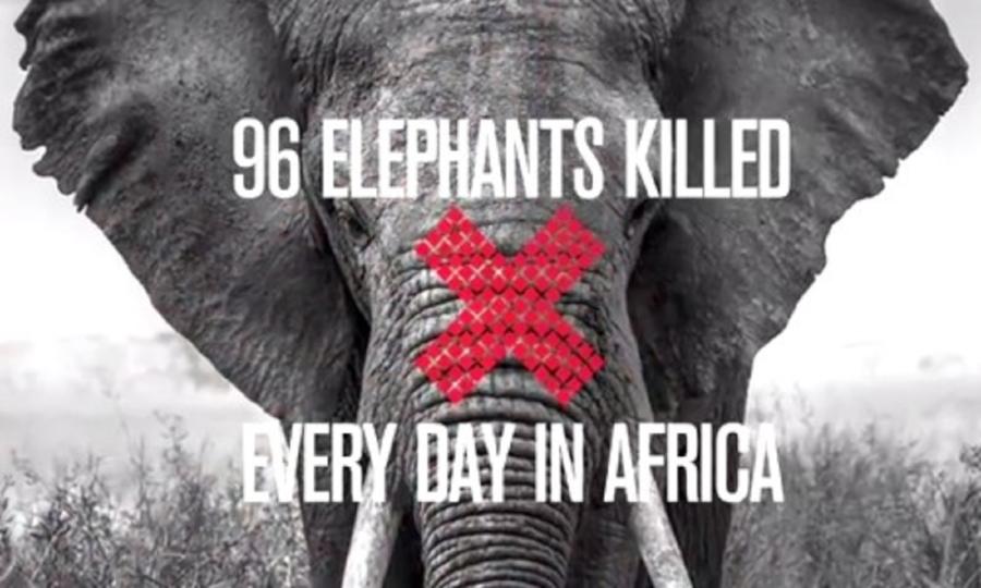 96-elephants.jpg
